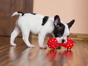 spielzeug-fur-hunde